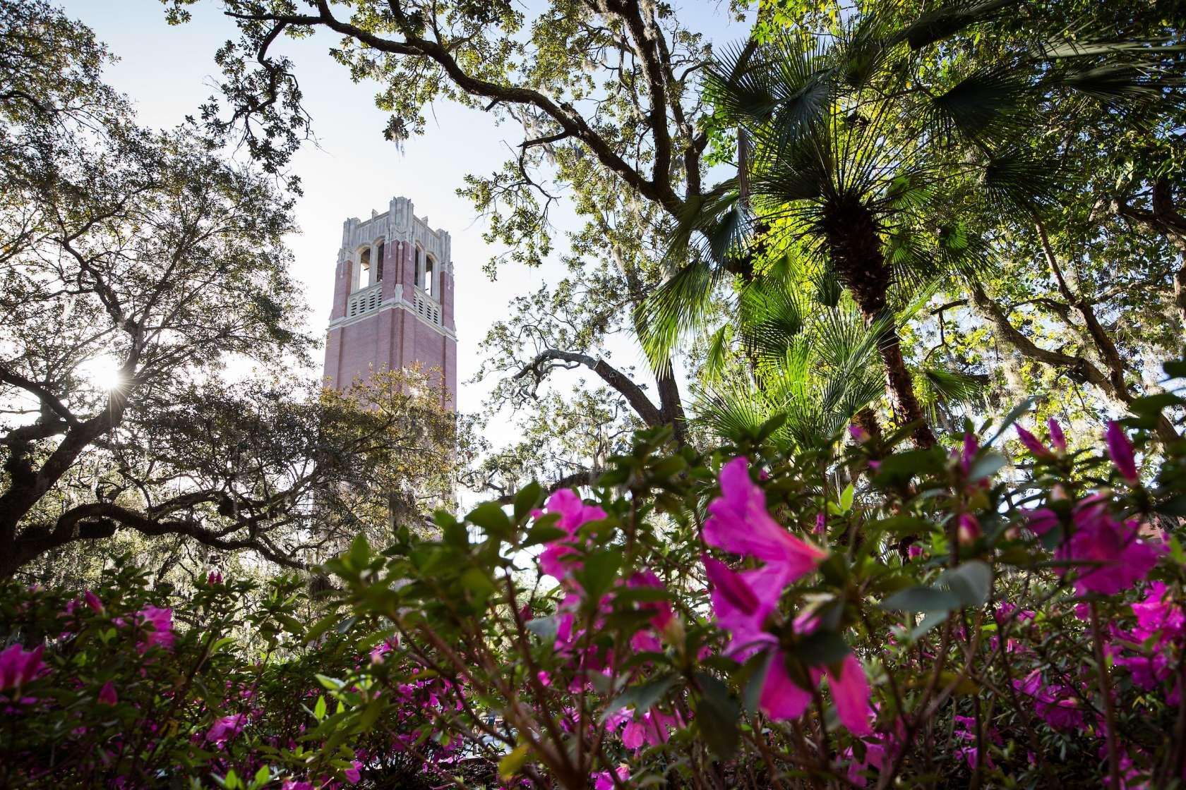 University of Florida's iconic Century Tower surrounded by spring foliage.